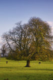 Co.Carlow Landscape. Landscape and tree in Co.Carlow, Ireland royalty free stock image