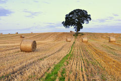 Co.Carlow Landscape Royalty Free Stock Photo