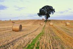 Co Carlow landskap Royaltyfri Foto