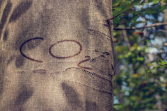 CO2 Carved into Tree Trunk. Close Up of CO2 Carved into Tree Trunk Royalty Free Stock Image