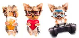 Cão com cerveja, almofada do jogo e amante Imagem de Stock Royalty Free