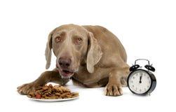 Cão com fome Imagem de Stock Royalty Free