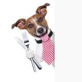 Cão com fome Fotos de Stock Royalty Free