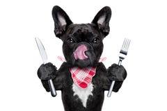 Cão com fome Fotos de Stock