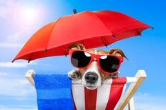 Cão com schades Imagem de Stock Royalty Free
