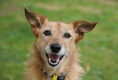 Cão com um sorriso feliz Imagens de Stock Royalty Free