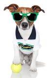 Cão como o jogador de ténis Fotos de Stock Royalty Free