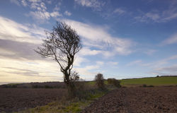Co.Cork Farmland Royalty Free Stock Photo