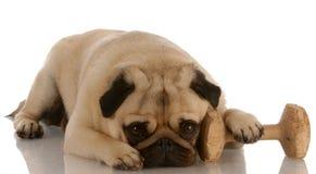 Cão da obediência Imagem de Stock