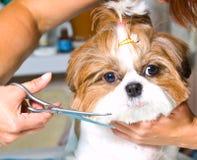 Cão da preparação Fotos de Stock Royalty Free