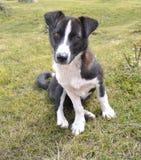 Cão da rua. Imagens de Stock Royalty Free
