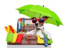 Cão das férias de verão Imagem de Stock Royalty Free