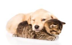 Cão de cachorrinho do bebê e gatinho pequeno que dormem junto Isolado Fotos de Stock Royalty Free