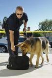 Cão de polícia que aspira o saco Imagem de Stock