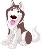Cão de puxar trenós bonito Imagens de Stock Royalty Free