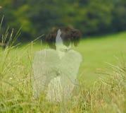 Cão do anjo do falecimento do animal de estimação Imagem de Stock