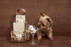 Cão do dia dos Valentim Imagens de Stock Royalty Free
