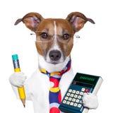 Cão do secretário Fotografia de Stock