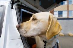 Cão do tubo aspirador Fotos de Stock Royalty Free