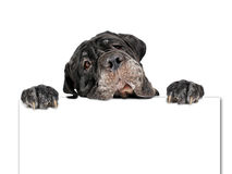 Cão e cartão. Imagens de Stock