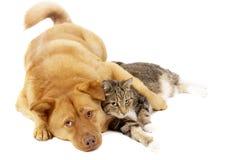 Cão e gato que relaxam Fotos de Stock Royalty Free
