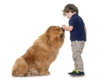 Cão e rapaz pequeno da comida de comida Fotos de Stock