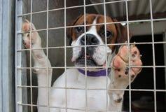 Cão em uma gaiola Fotos de Stock Royalty Free