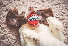 Cão engraçado Fotografia de Stock