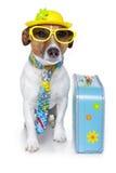 Cão engraçado como um turista Fotos de Stock Royalty Free