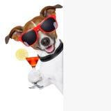 Cão engraçado do cocktail Fotografia de Stock Royalty Free
