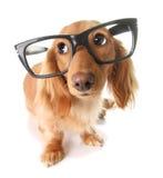 Cão esperto Fotos de Stock Royalty Free