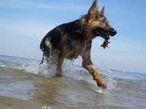 Cão fresco Imagens de Stock Royalty Free