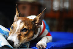 Cão ideal do dia Fotos de Stock