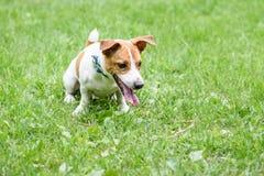 Cão impertinente punido pelo proprietário que senta-se por comando humilhado Foto de Stock