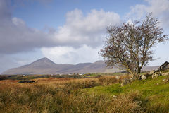Co.Mayo, Ireland. Co.Mayo landscape with Croagh Patrick in background Royalty Free Stock Photography
