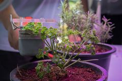 Co2 measuring device for measuring photosynthesis of plant growing with artificial led light. Carbon dioxide measuring device for measuring photosynthesis of royalty free stock image
