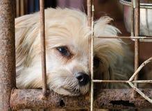 Cão na gaiola Foto de Stock