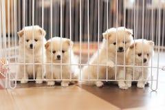 Cão na gaiola Fotos de Stock Royalty Free