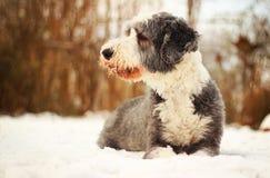 Cão na neve Fotografia de Stock Royalty Free