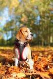 Cão no parque Fotografia de Stock Royalty Free