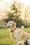 Cão no parque Imagens de Stock