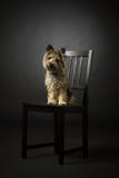 Cão no preto Fotografia de Stock