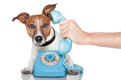 Cão no telefone Fotos de Stock Royalty Free
