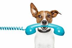 Cão no telefone e no th da vista o lado Fotos de Stock