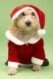 Cão no traje de Santa Imagens de Stock