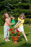 Co-operation. Two small young girls water the flower Royalty Free Stock Images
