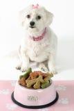 Cão Pampered Fotografia de Stock