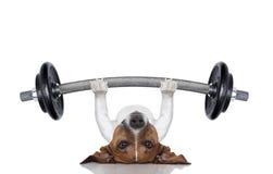 Cão pessoal do instrutor Imagem de Stock Royalty Free