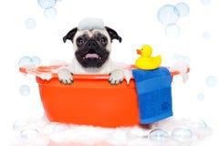 Cão que toma um banho Foto de Stock Royalty Free