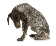 Cão ruim Fotografia de Stock Royalty Free
